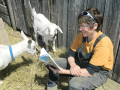 "New local author Lea Kitler shares her recently published book ""A Magnificent Life – my journey to the Hill"" with the goats at her organic farm near Highland Grove. JIM EADIE Special To This Week"